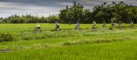 Rice paddy cycling in Vietnam | Richard I'Anson