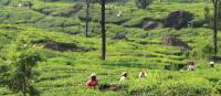 Views across the tea plantations in Alleppey | Scott Pinnegar